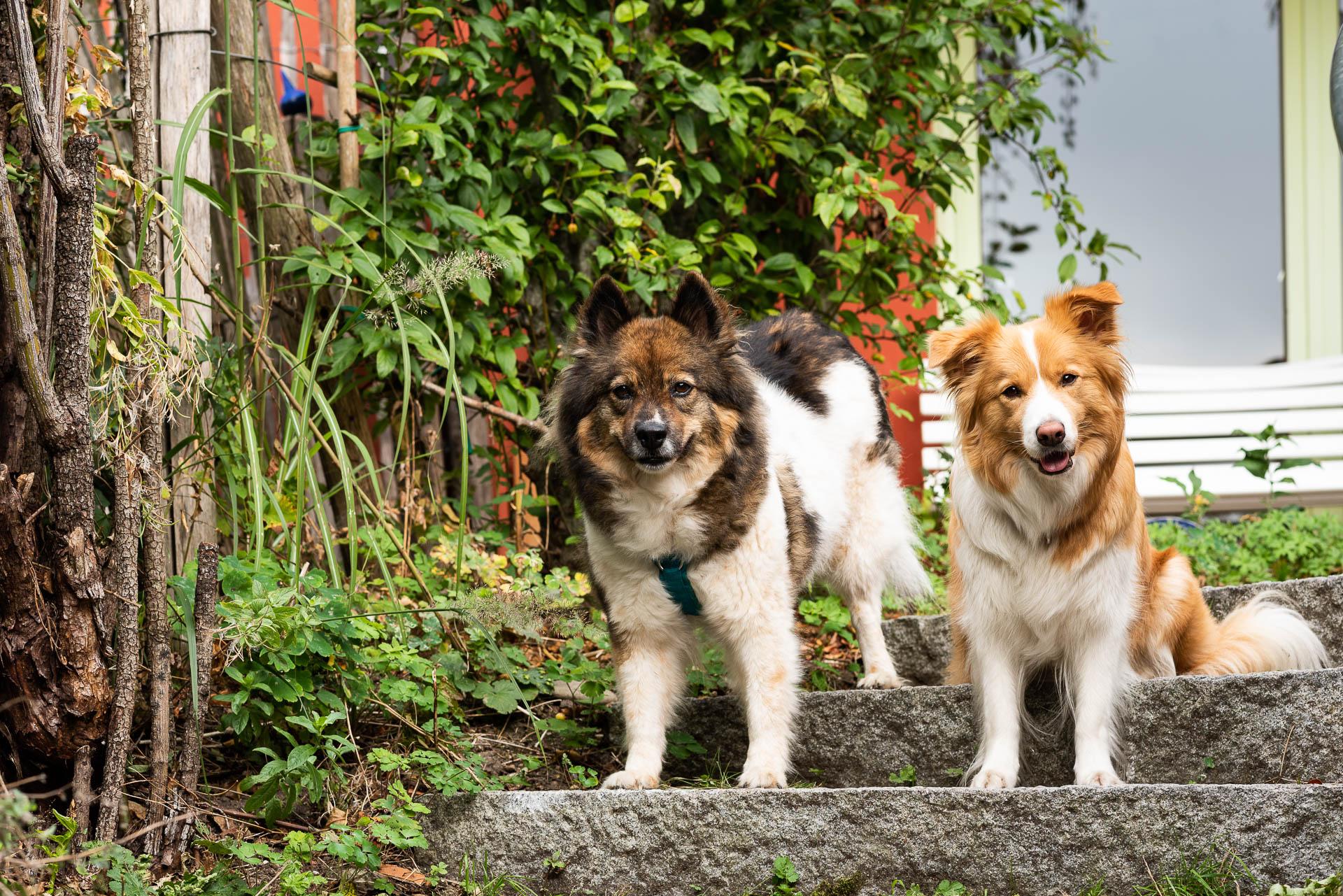 Hunde für die tiergestützte Therapie bei Ergotherapie Wachter und Team Kempten im Allgäu